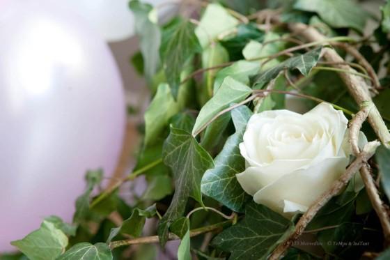 Lierre et rose blanchexxxxxxxxxxxxxxxxxxxxxxxxxxxx